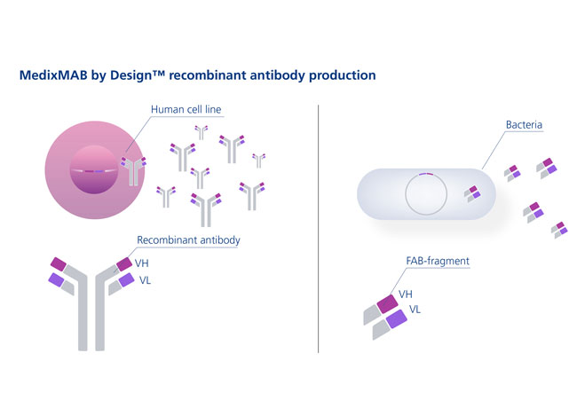 Medix Biochemica launches MedixMAB by Design™ at AACC 2013