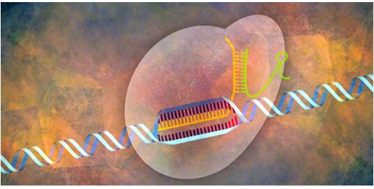 CRISPR Webinar – Easy and Efficient Genome Modifications